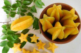 карамбола-польза и вред как едят фрукт