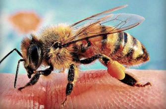 пчелиный яд-свойства-польза и вред для организма человека