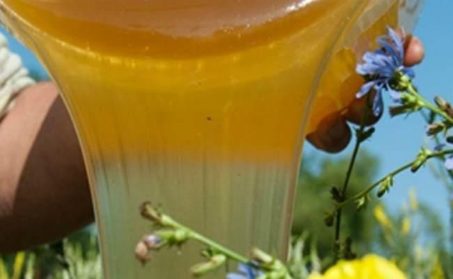 таежный мед-полезные свойства