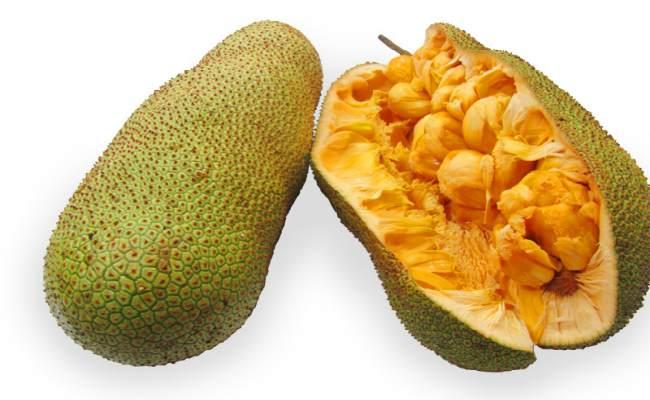 чемпедак-фрукт полезные свойства польза для организма