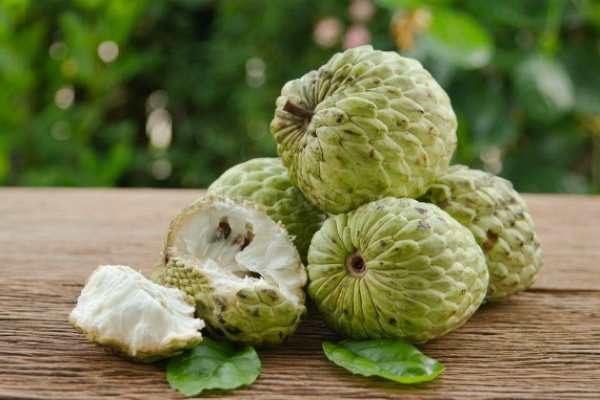 cherimojya-frukt-poleznye-svojstva-protivopokazaniya