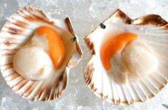 morskie-grebeshki-polza-i-vred